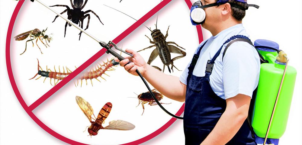 Pest Control Cmms